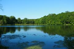 Rockefeller Lake Preserve (Jemlnlx) Tags: park new york lake ny canon landscape eos swan state mark iii l 5d usm rockefeller preserve ef 1740mm f4 westchester