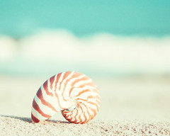 Nautilus (CarolynsHope) Tags: orange white beach beige teal shell coastal shore seashell seashore nautilus