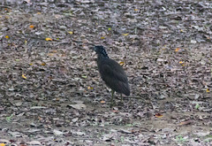 IMG_3348 (jaglazier) Tags: birds animals june gardens cities taiwan parks taipei daanforestpark urbanism 2012 daan unidentified 6112 unidentifiedspecies copyright2012jamesaglazier