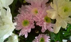 IMAG0686 (Wild Blue Melanie) Tags: from flowers yr 11s