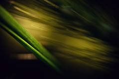 Natural abstract (Vajdulk Norbert   Fotogrfia) Tags: abstract color macro green nature grass photography spring hungary sony norbert line 60mm alpha tamron magyaro
