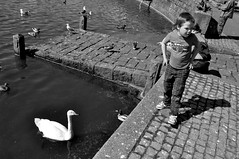 (Steini789) Tags: bw white black cars birds ginger blackwhite iceland duck kid swan pond child feeding pigeon seagull redhead reykjavk tjrn