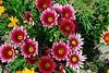 flowers (Yvon Merlier) Tags: flowers sea love soe platinumphoto