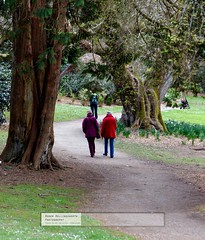 Two Old ladies unwilling to wait (doublejeopardy) Tags: garden cornwall nationaltrust footpath trelissick