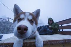 Mush (remofoto) Tags: blue dog snow man green bag puppy table nose eyes husky mt mount jacket backpack hood pup    1022 baldy notch              topofthenotch