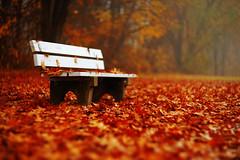 Autmn Leafs (kubilayturan) Tags: autmn leafs germany bamberg hain park sony a7ii helios40 85mm f15 swirl bokeh brown red colours love
