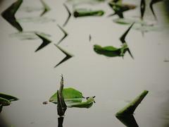 bokeh (Darek Drapala) Tags: park reflection nature water mirror bokeh panasonic reflects waterscape panasonicg5