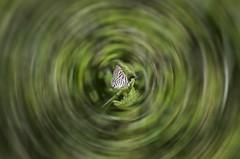 Butterfly World (zai Qtr) Tags: world pakistan green nature butterfly insect nikon aamir gul doha qatar bahar swabi maini ihavenoideahowididit summerof2014 batakara zaiqtr