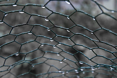 Constellation (brucetopher) Tags: cold wet water rain weather fence grid droplets wire pattern mesh web screen rainy raindrops hexagon droplet fencing contemplative chickenwire raindrop damp drizzle