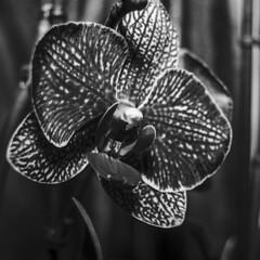 Orchidea (DarioMarulli) Tags: