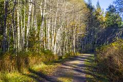 Country Road - Iron Horse Trail (Don Thoreby) Tags: forest moss cedar cascades greenway cascademountains cascaderange ironhorsetrail alders cedartrees mountaintosound aldertrees mountaintosoundgreenway