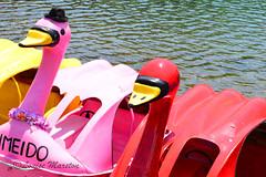 Lake Chuzenji - swan pedalos (louisemarston) Tags: lake japan nikko lakechuzenji nikkonationalpark