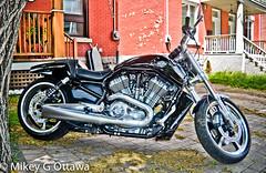 Harley-Davidson V-Rod  - Ottawa 06 16 (Mikey G Ottawa) Tags: street city ontario canada contrast ottawa explore motorbike chrome harleydavidson moto motorcycle edit motorrad vrod adobelightroom explored mikeygottawa