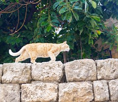 Everywhere you look in #Israel there are #cats. I could plan a whole trip around photographing them. Today I shared a few of my favorite shots #otb. Link in profile.  (momfluential) Tags: trip favorite cats look israel you shots profile plan whole few link there around them today could everywhere photographing shared otb i