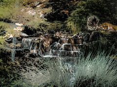 Relajndose. 27183236571_57d95f2054_ot5 (seguicollar) Tags: art plantas paisaje riachuelo artedigital tigres manantial photomanipulacin imagencreativa artecreativo virginiasegu