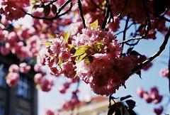 Sunny day (m.sukhanenko) Tags: sky film sunshine iso200 bokeh olympus analogue zuiko sunray olympusom2sp sunnyday fujifilmsuperia om2sp zuikof1850mm
