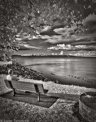 Watching Life Passing (mjardeen) Tags: park blackandwhite bw white black tree texture leaves clouds bench relax landscape ir island geese washington pattern sony 28mm tranquility infrared wa tacoma fe vashon watcher a7ii rustonway 720nm 2 landscapesshotinportraitformat macphun a7m2 tonalitypro sonyfe28mm2
