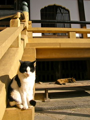 temple cats (hamapenguin) Tags: animal cat neko 猫 straycat ネコ 野良猫