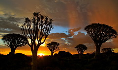 Beautiful sunset at the Quiver tree forest, Southern Namibia (travelbug365) Tags: africa travel wild canon globe bestof earth tourist best destination tours travelbug namibia 2012 myfavourite karibu southwestafrica 50d sigmalenses canoneos50d travelbug365 mybesttravelphotos