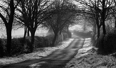 Early Morning Light, Grange Road (Ninja Dog - 忍者犬) Tags: uk trees england nature landscape mono countryside spring nikon scenery frost northamptonshire april countrylane 2012 pictureperfect hedgerows d80 geddington blinkagain bestofblinkwinners blinksuperstars