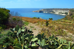 White Cliffs (albireo2006) Tags: blue sea wallpaper cactus water bay countryside mediterranean background malta cliffs pricklypear whitecliffs seaarch malteselandscape maltesecountryside hofralkbira ofralkbira