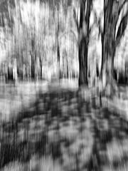 IMG_3656_850nm_IR_B&W - Panning (Syed HJ) Tags: trees blackandwhite bw canon ir blackwhite woods infrared panning g9 850nm canong9