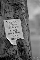 Quote (juliaschilling) Tags: leica tree analog time quote streetphotography philosophy heidelberg baum zeit zitat