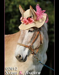 Rosebud rules! (Rock and Racehorses) Tags: pink flowers portrait rescue wearing hat rip straw molly rosebud mascot belgian mule strawhat draft workhorse ska1347 cvhr centralvirginiahorserescue rip2014