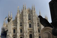 Milano - Dom, Italien