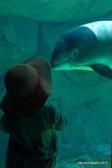 Vancouver Aquarium 2012 (Catriona67) Tags: nature animals vancouver butterfly penguin aquarium penguins jellyfish butterflies parrot otter seals whales sealion dophins mamoset