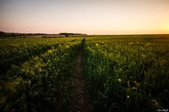 Spring Evening (NeoNature) Tags: sunset france nature canon lens soleil exposure angle path wheat wide champs coucher grand filter nd fields normandie mm pause lente calvados chemin 1022 blé lentgh