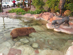 Buck cools off (twm1340) Tags: county arizona dog fish wet fountain statue shopping big large sedona az center shaggy buck hillside coconino verdevalley yavapai javelinacantina scaredthecrapoutofmeatfirst