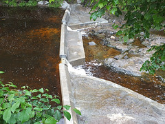 Fish Passes (rowanlea51) Tags: