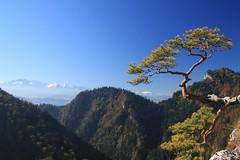 Mountains (Magryciak) Tags: mountain pine landscape europe view poland szczawnica 2011 pieniny