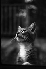 Mindful (midnightrook) Tags: light shadow bw cute love window glass monochrome cat 35mm canon vintage mouth fur fun happy mono nice paw eyes friend kitten pretty glow shadows dof friendship little sweet bokeh handsome kind whiskers tiny meow dreamy nightmare f2 shallow dslr filmic t3i ef35mmf2 35f2 600d ef35f2 bokehlicious thecatwhoturnedonandoff twittertuesday midnightrook highqualityanimals dpsbestfriend ldlnoir