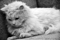 حيييِلْ هآلكْنـي' آلتععع'ـب =( (khlọọd ặlkhặldi   خلود الخالدي) Tags: nikon تصوير d90 قطه حيل خلود التعب الخالدي هالكني khlood alkhaldi المصوره الفتوغرافيه