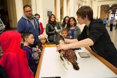Kate showing a Hornbill Study Skin (arlenekoziol) Tags: fieldmuseum teaching stanleyfieldhall birdsinart