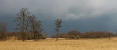 De Wieden (NLHank) Tags: sky nature water dutch landscape skies natuur wolken lucht riet wanneperveen giethoorn natuurmonumenten luchten 2014 voorjaar wieden hollandse