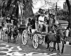 Carriage (ChandrahaasCreation) Tags: life road lighting camera city light 2 two people bw horse black color men love beauty look animal wheel contrast digital vintage dark children lens landscape happy four lights design daylight blackwhite cool day different close carriage bright festivals cannon dhaka dslr decorate fourwheel dhakacity