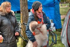 fluffy (stevefge (away travelling)) Tags: park people dogs netherlands nijmegen women nederland goffertpark koningsdag kingsday nederlandvandaag reflectyourworld