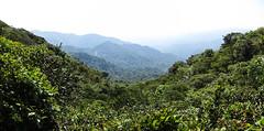 "La Réserve de Monteverde <a style=""margin-left:10px; font-size:0.8em;"" href=""http://www.flickr.com/photos/127723101@N04/26339564304/"" target=""_blank"">@flickr</a>"