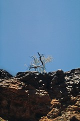 lone tree in the Kakadu NP (Stefan Ulrich Fischer) Tags: tree abandoned 35mm landscape nationalpark oz australia slide scanned outback kakadu analogue downunder northernterritory kodakektachrome minoltaxd7