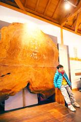DSC01671 (YUKI Hsu / nlyuki) Tags: chiayi   sacredtree   shenmu alishannationalscenicarea 6y3m 2y2m