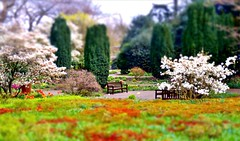 Jolly Spring (farmspeedracer) Tags: park gay white flower color tree green germany landscape spring scenery bright ground bloom april