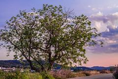 Caada (Alicante) (jamfotos1) Tags: espaa atardecer paisaje alicante turismo costablanca caada comunitatvalenciana