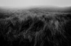 Hidden Layers (David Haughton) Tags: winter blackandwhite bw monochrome grass landscape mono cornwall dunes windy godrevy gwithian