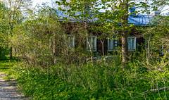 4Y1A8012 (Ninara) Tags: sea summer nature finland island helsinki kes vallisaari historiakohde sotilassaari