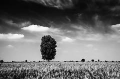 movement (Rudolf Getel) Tags: sky blackandwhite bw cloud motion tree monochrome field clouds composition contrast dark landscape movement outdoor highcontrast cc noise vojvodina attribution