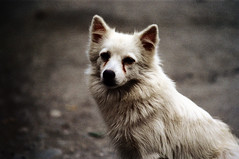 32-191 (ndpa / s. lundeen, archivist) Tags: winter dog color fall film animal 35mm village nick taiwan 1970s 1972 hualien 32 taiwanese eastcoast unidentified dewolf rurallife republicofchina easterncoast easterntaiwan nickdewolf photographbynickdewolf hualiencounty reel32