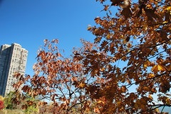 fall_239 (Sascha G Photography) Tags: autumn trees toronto color tree fall leaves leaf nikon seasons waterfront lakeshore indiansummer d60